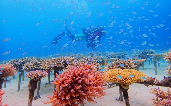 サンゴの苗づくり体験